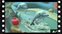 Educational cartoon videos to learn sea animals: dolphin