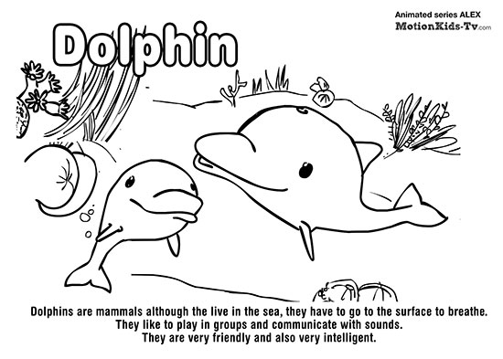 dolphins-educational-coloring-pages-kids-tots-children
