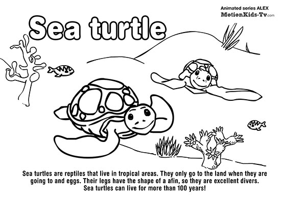 sea-turtle-animals-coloring-pages