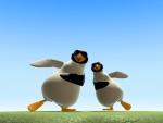 Pingüinos - Animales del mar