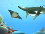 Manta - Animales del mar