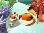 Pez payaso - Animales del mar