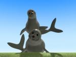 Foca - Animales del mar