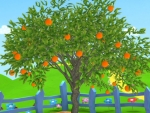 Orange- Fruit and vegetables pictures