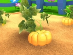 Pumpkin- Fruit and vegetables pictures